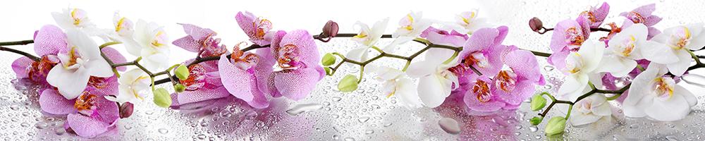 Орхидея стеновая панель